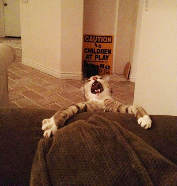 8 Perfectly Timed Over-exaggerated Cat Moments Will Make You Chuckle _ couch _ everything inspirational