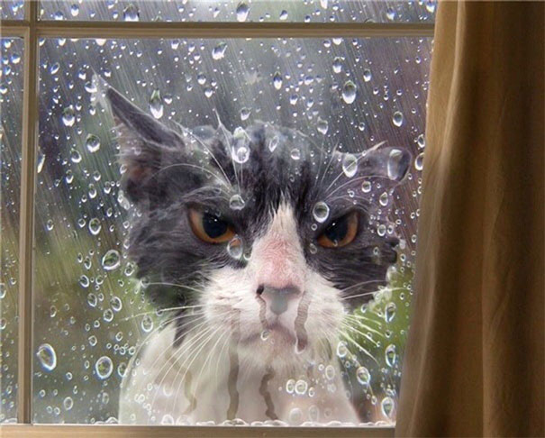 8 Perfectly Timed Over-exaggerated Cat Moments Will Make You Chuckle _ rain angry cat _ everything inspirational