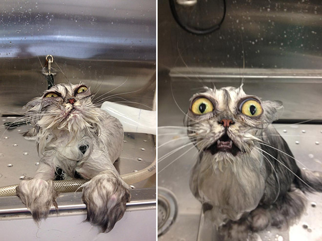 8 Perfectly Timed Over-exaggerated Cat Moments Will Make You Chuckle _ bath cat _ everything inspirational