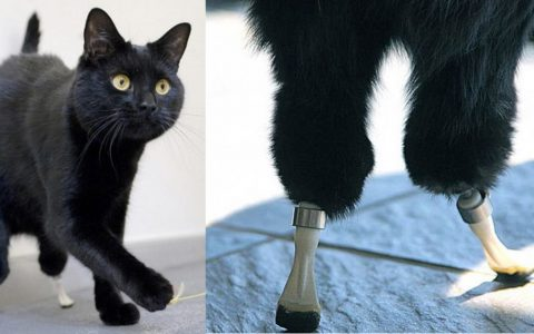 A Farming Accident Nearly Killed Him, Then He Got A Miracle and Some Duct Tape _ Oscar Bionic Cat _ everything inspirational