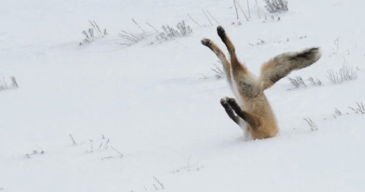 hilarious winners of comedy wildlife photography awards _ everything inspirational