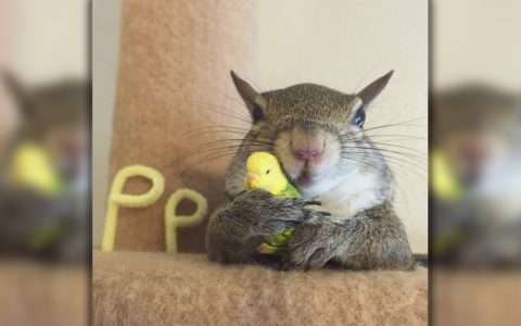 Jill The Squirrel Was Rescued During Hurricane And Found A New Home _ everything Inspirational