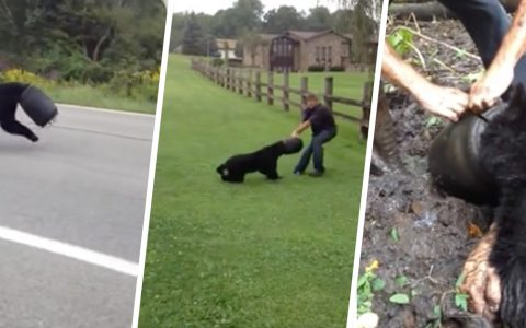 Bear Runs by With Bucket Stuck on Its Head, Then Man Risks Life to Save It _ everything inspirational