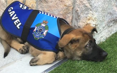Everything Inspirational - Gavel Police Dog