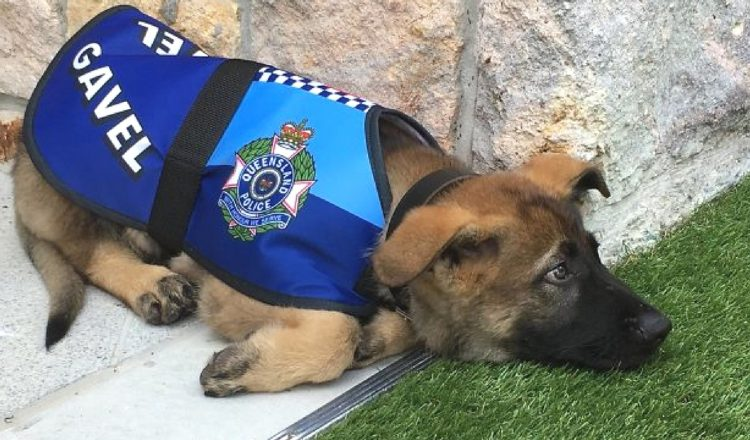 Everything Inspirational - Gavel Police Dog
