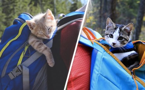 Fish and Chips: This Adventure-Loving Feline Duo Will Make You Smile _ Everything Inspirational