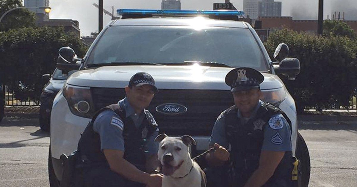 officer saves thirsty pit bull _ lake michigan _ everything inspirational