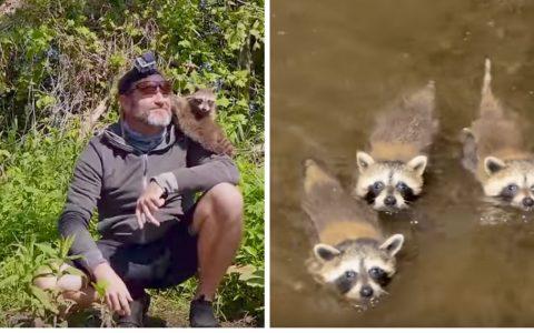 everything inspirational - raccoon babies