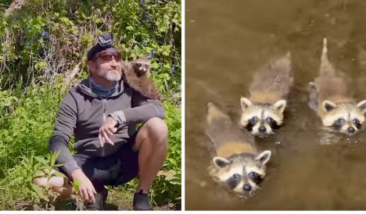 everything inspirational - raccoon babies