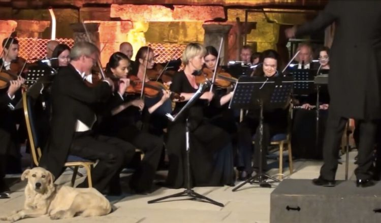 Stray Dog Steals The Show Lying Down During Orchestra Performance _ everything inspirational