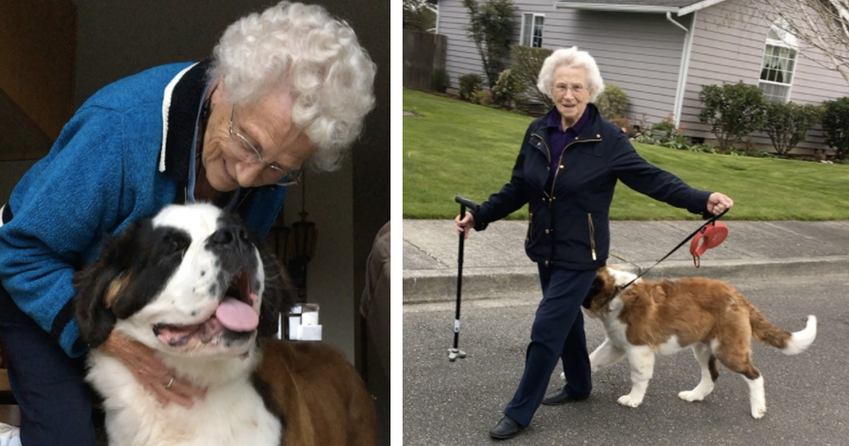 Widow Befriends Neighbor's Puppy And The Two Are Inseparable _ everything inspirational