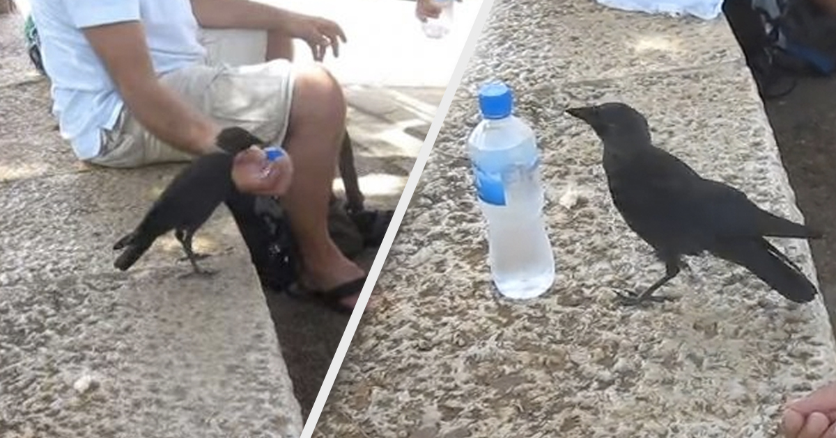 Smart Bird Turns To Family At Park For Help Getting Water On A Hot Day _ everything inspirational