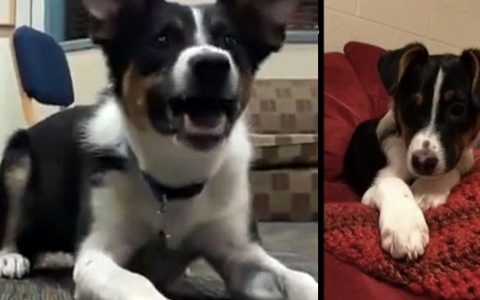 Dog Whispers Instead Of Bark So He Doesn't Wake The Neighbors _ everything inspirational
