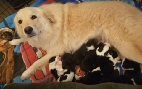 everything inspirational - Depressed Dog Loses Puppies in Fire And Is Introduced To A New Litter