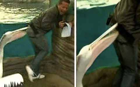 Pelican Attacks Weatherman And He Can't Stop Laughing _ everything inspirational
