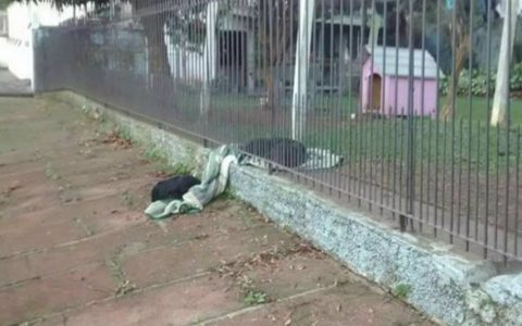 Puppy Drags Her Blanket To Share With A Cold Stray Dog