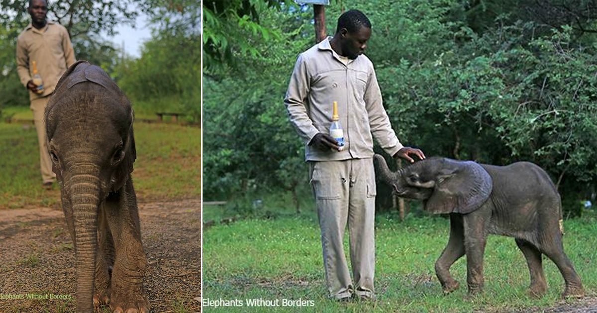 baby elephant saved by truck drivers _ botswana _ everything inspirational