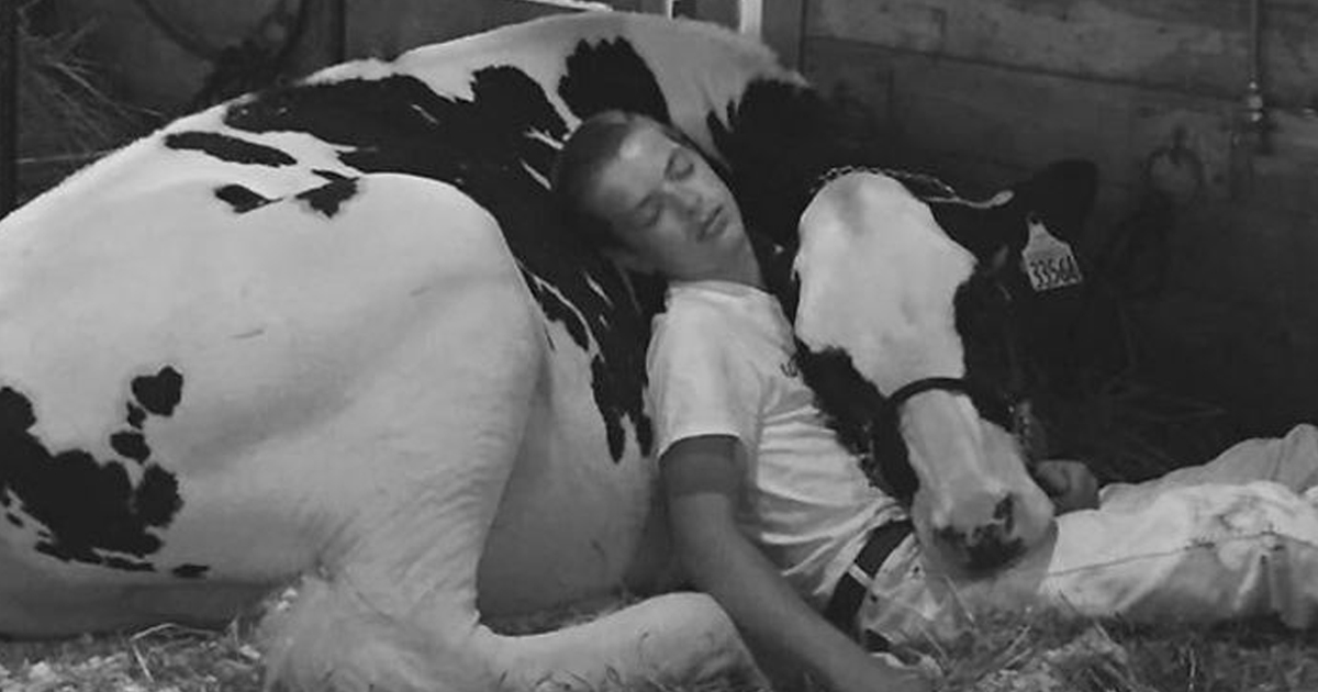 Boy Napping With His Cow Wins The Internets Heart _ everything inspirational
