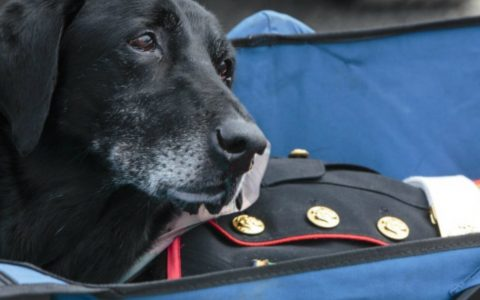 Military Dog is Given a Very Emotional Hero's Goodbye_ everything inspirational