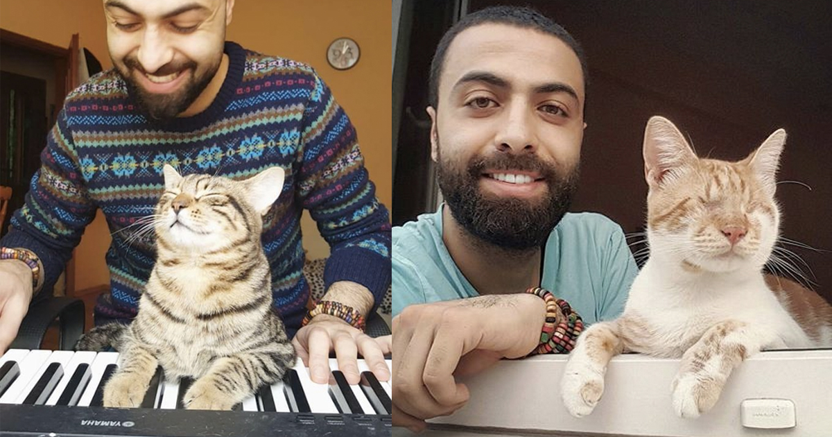 Sarper Duman _ Blind Cat Reaction to Piano video _ everything inspirational