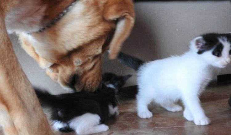 Dog Rescues Abandoned Kittens Left to Fend for Themselves_ everything inspirational