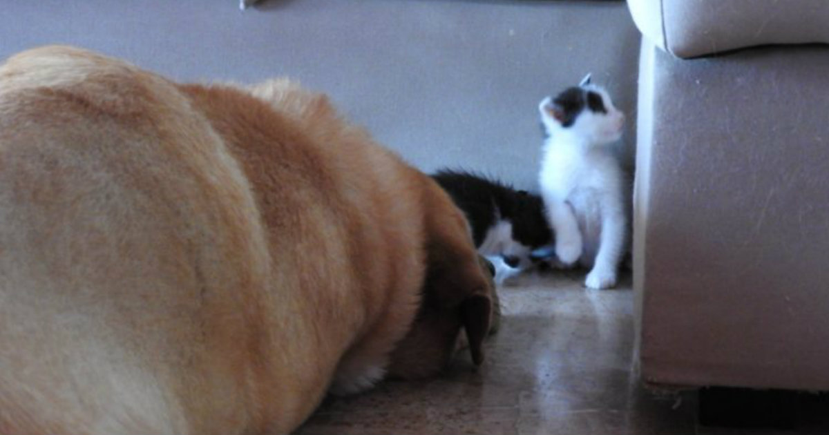 Dog Rescued Abandoned Kittens Left to Fend for Themselves_ everything inspirational