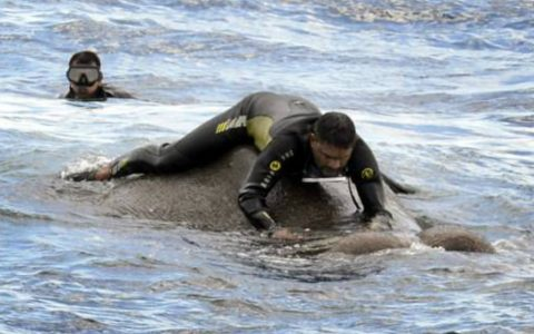 Elephant Found Swimming for It's Life in the Ocean Is Saved_ everything inspirational