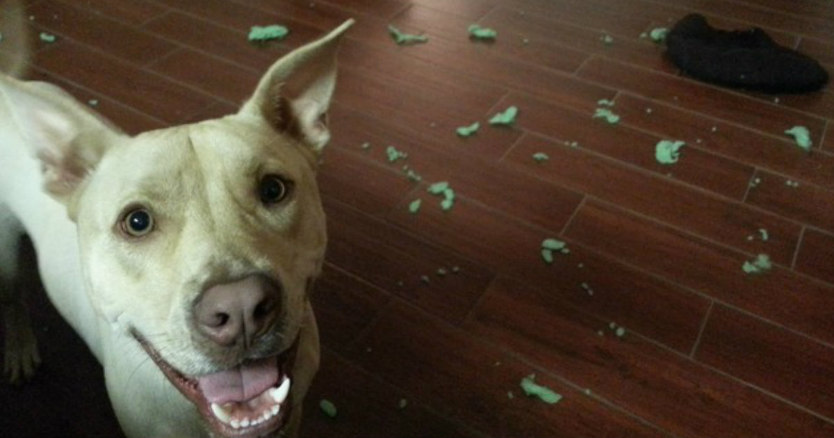 10 Times Naughty Pets Were Caught In A Hilarious Moment_ everything inspirational