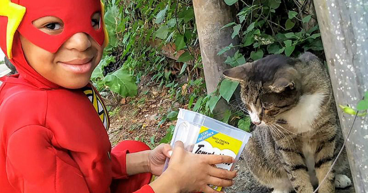 Boy Saves Homeless Cats While Dressed As A Super Hero_ everything inspirational